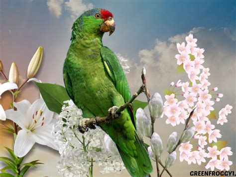 wallpaper of green parrot green parrot wallpaper and background 1333x1000 id 427077