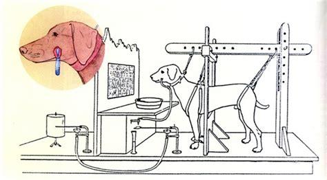 pavlov experiment ivan petrovich pavlov experiment cynology