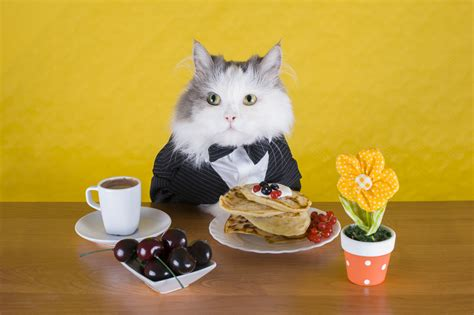 cat dinner how to treat your cat like a king or vet medic