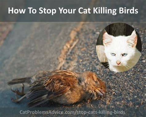 how to stop cats killing birds prevent cats from catching
