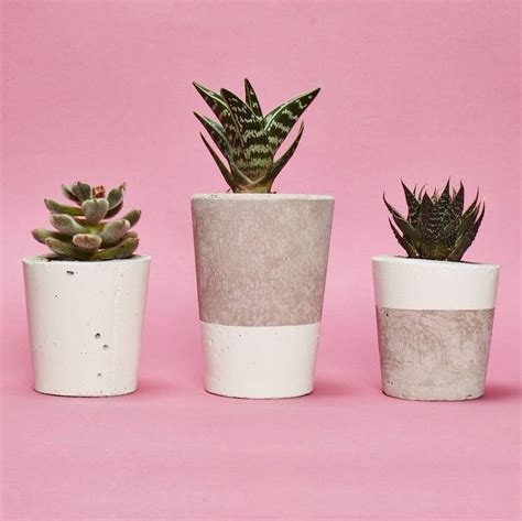 Baby Pinkis 2 Pot white concrete plant pot with cactus or succulent by hi cacti notonthehighstreet