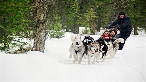 sledding canada sledding in canmore travel alberta canada