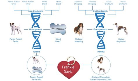 dna test for dogs do dna tests work how accurate are they top tips