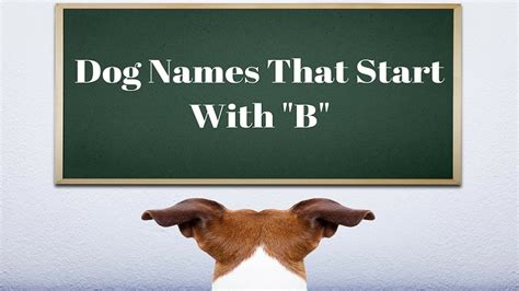 breeds that start with s boy and names that start with b small fluffy breeds