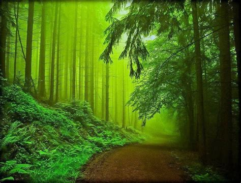 Nienhagen Germany Trees | nienhagen wood germany pinned by mekon trees 3