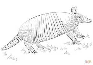 nine banded armadillo coloring page free printable