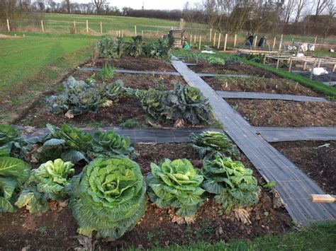 Garden Allotment Ideas 25 Best Ideas About Allotment Planner On When To Plant Vegetables Vegetable Garden