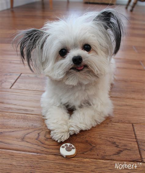 norbert the norbert and birthday treat https pollyparkerpress leadpages net norbertbook