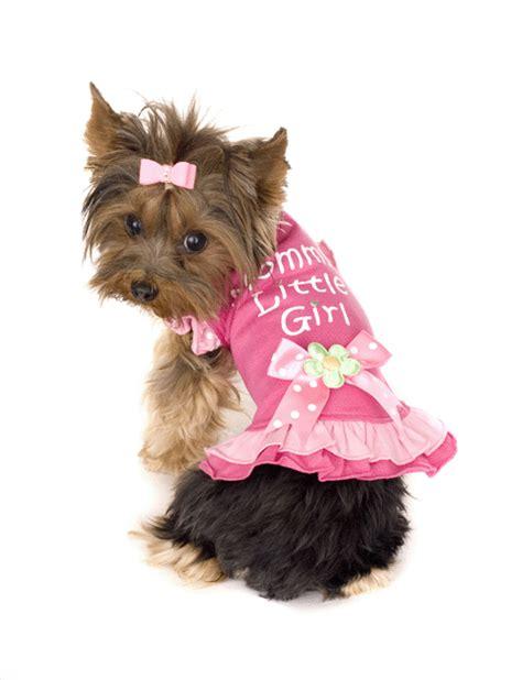 xxs puppy clothes xxs clothes