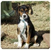 dogs for adoption albuquerque 78 best images about orange blossom on adoption santa fe nm and