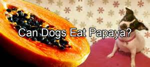 can dogs eat edamame pethority the authority for all your pet needs