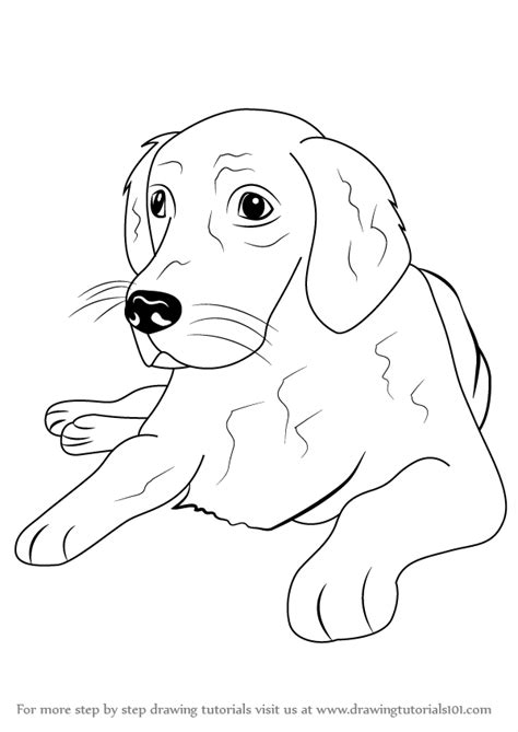 how to a golden retriever learn how to draw a golden retriever farm animals step by step drawing tutorials
