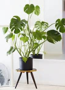 house plants 25 best ideas about house plants on plants