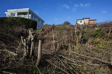 city west seattle city considers felony charges in illegal west seattle clear cut the seattle times