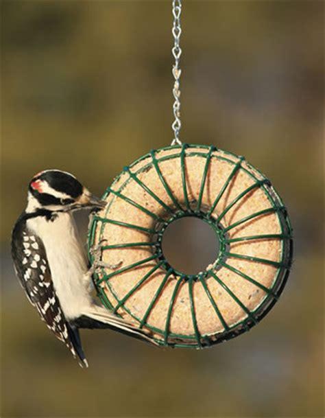 Circular Bird Feeder Duncraft Suet Feeder