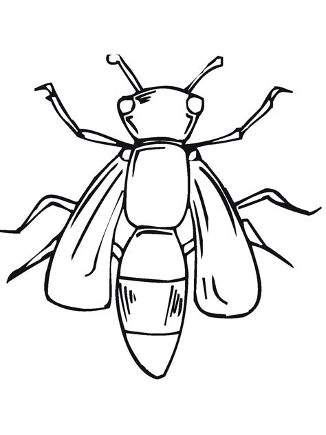 insects coloring page bug insect coloring pages primarygames com
