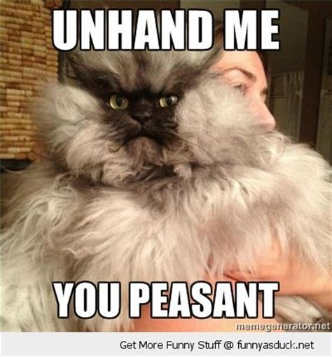 Annoyed Cat Meme - pin by linda snell on kittehs pinterest