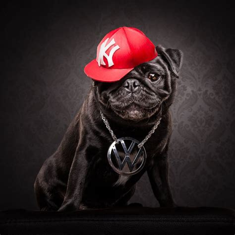 pug variables the pug portraits of pugs posing as 80s and 90s hip hop artists