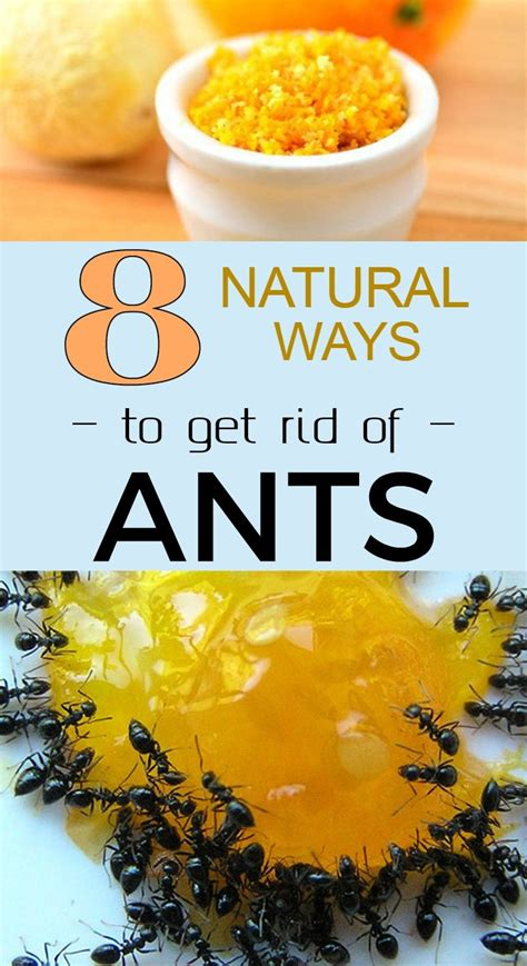 best way to get rid of ants in bathroom how to get rid of ants pet friendly how to