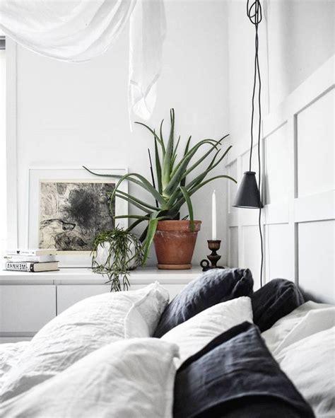 piante da letto piante da da letto