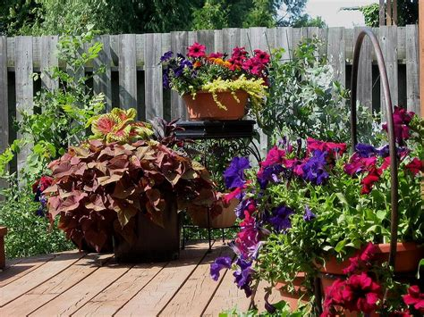 Patio Container Garden by A Patio Flower Container Garden Tips How To Build