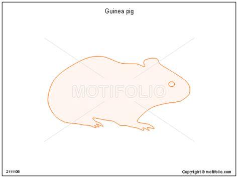 guinea pig diagram guinea pig illustrations