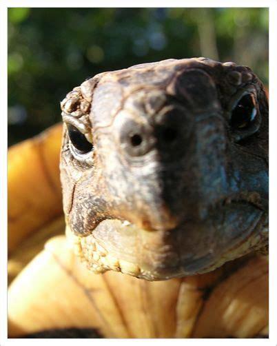 tartarughe marine alimentazione tartaruga di terra meravigliosi animali
