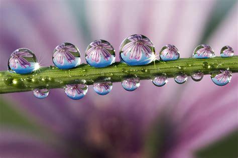beautiful images beautiful dewdrops