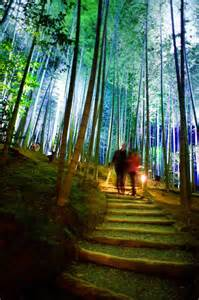 Landscape Pathways out of this world bamboo at arashiyama bamboo forest