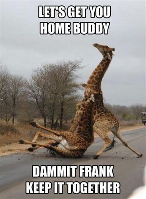 Drunk Giraffe Meme - 30 funny animal captions part 10 funny memes funny