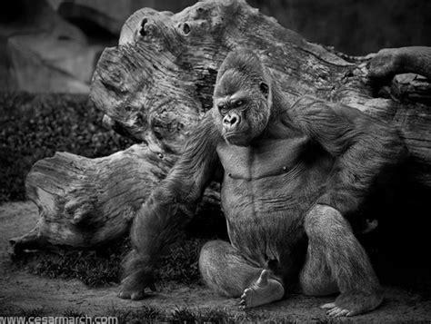 imagenes impresionantes animales salvajes fotograf 237 a de animales salvajes 42 fotos animales