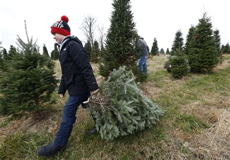 central ohio christmas tree farms ready to welcome