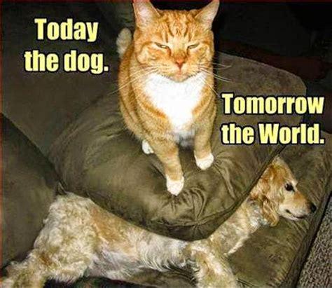 Clean Animal Memes - cat memes clean meme central