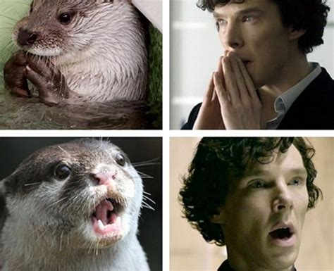 Cumberbatch Otter Meme - when he was a good sport about finding out about his otter meme benedict heart