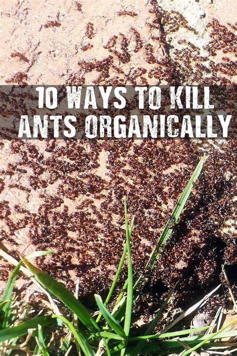 ways  kill ants organically household items  gardens