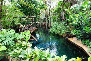 ultimate indoor tropical mixed species exhibit