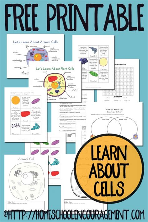 printable animal cell labels free plant and animal cell printables free homeschool