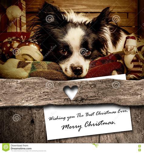 dog  santa christmas greeting card composition stock photo image  card nativity