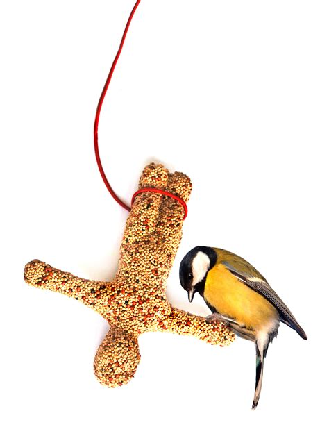 bungee bird feeder content gallery bungee jumper made