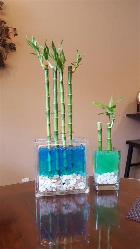 lucky bamboo  glass block  water soil beads
