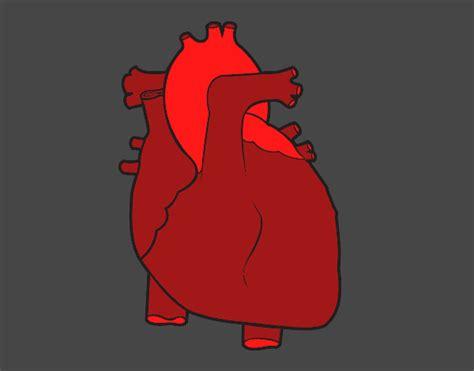 imagenes de corazones del cuerpo humano dibujo de coraz 243 n humano pintado por en dibujos net el d 237 a