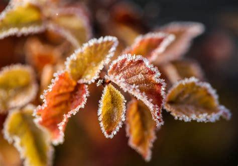 wallpaper bunga es kertas dinding cabang close up daun bunga es es