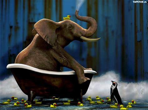 elephant in the bathtub słoń pingwin gumowe kaczuszki