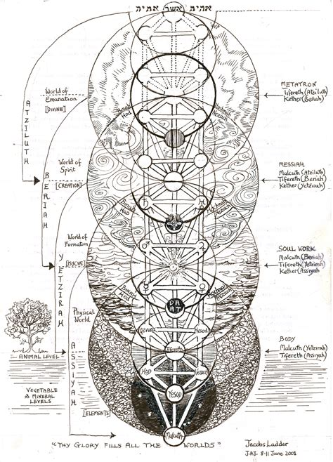 pattern of life meaning the seven year cycles on the tree of life janeadamsart