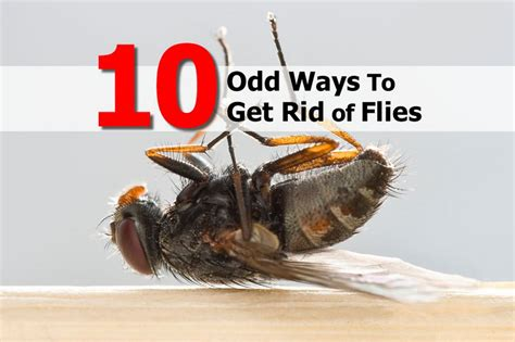 10 ways to get rid of flies