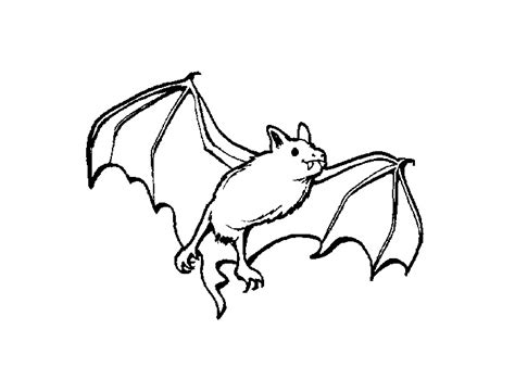 bat boat coloring page bat coloring pages the sun flower pages