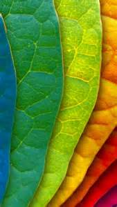 colorful leaves bright colored autumn leaves fall a rainbow of colors