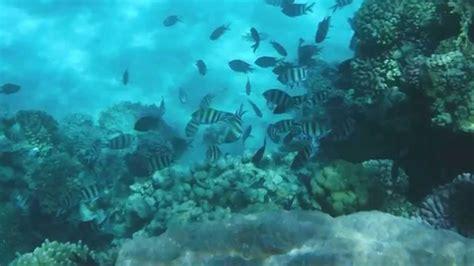 fuji underwater fujifilm finepix xp80 underwater