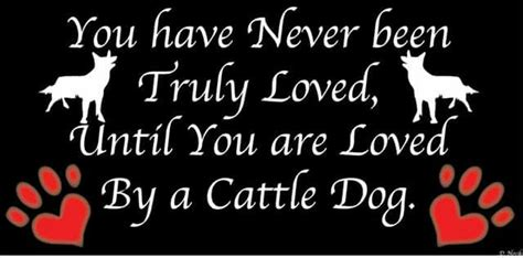 Yep!!!!!!!!! | Australian Cattle Dogs ~ Rule My World ...