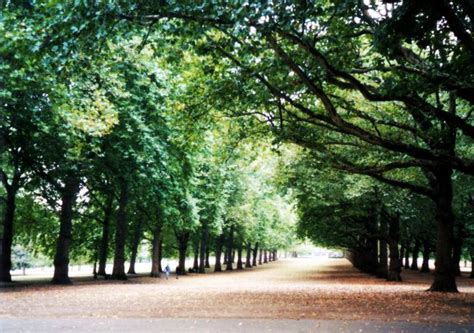 walkway with trees free photo file 1468933 freeimages com